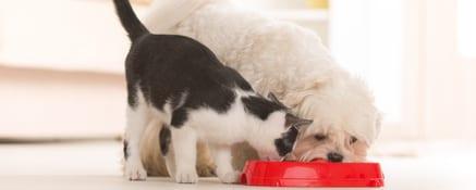 Tips voor het toedienen van supplementen bij kieskeurige dieren