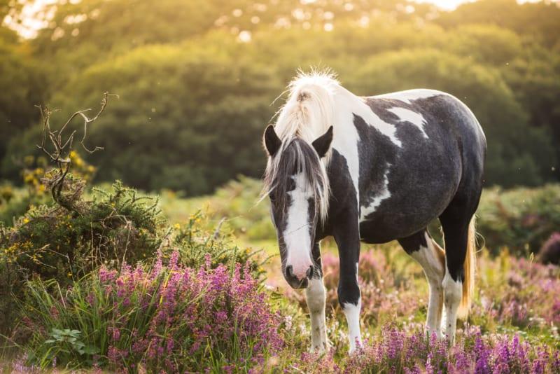 Het gebruik van kruiden voor dieren