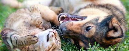 Giftige stoffen voor honden en katten