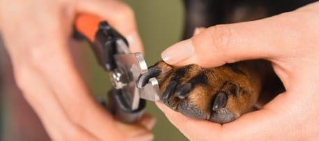 Alles over nagels knippen bij hond en kat