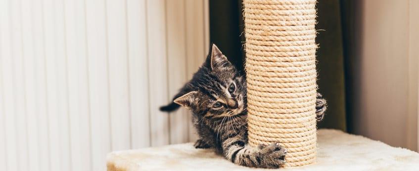 5 verrassende manieren om valeriaan te gebruiken voor katten