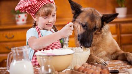 Gezonde hondenkoekjes - De Groene Os