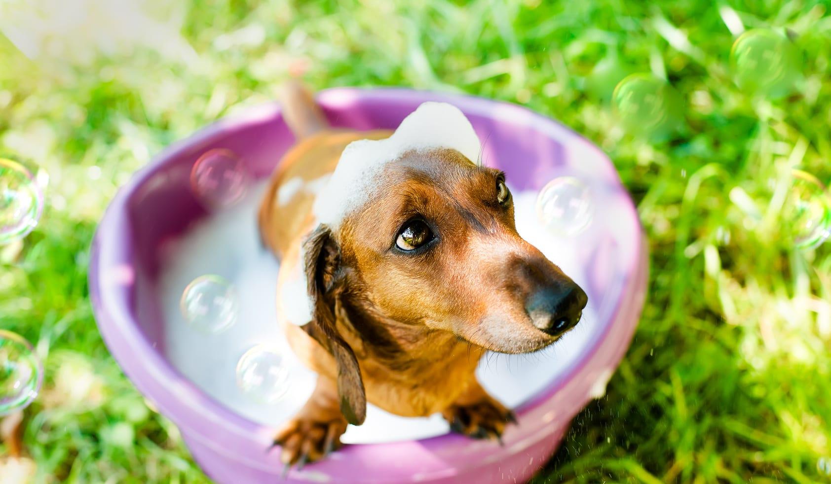 15 tips voor de ultieme huid- en wondverzorging voor je dier
