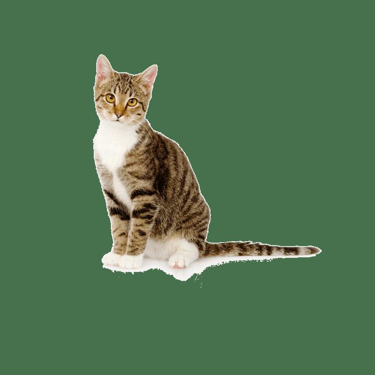 voor katten