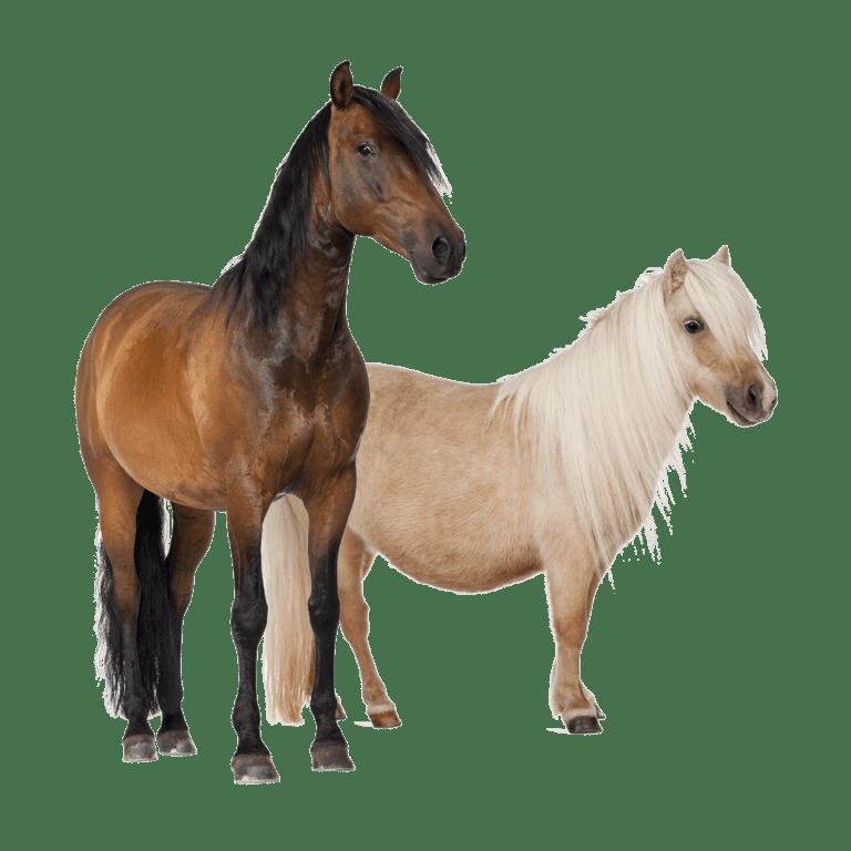 voor paarden