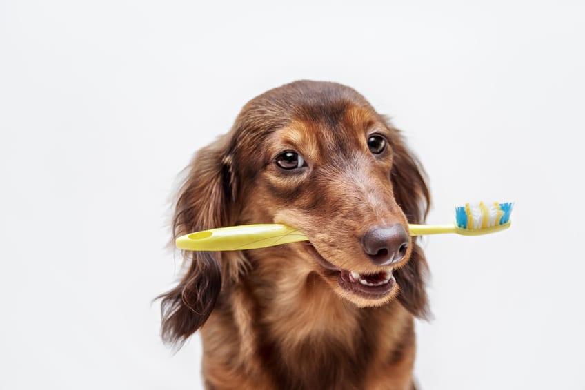 5 veelgestelde vragen over het gebit van honden en katten