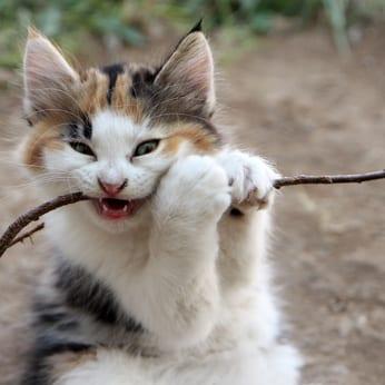 5x zelfgemaakte kattenspeeltjes
