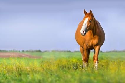 Paardenvoeding en supplementen tijdens de dracht