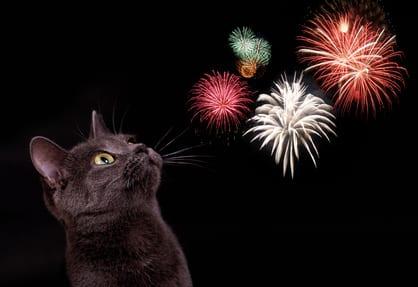 Stappenplan bij vuurwerkangst bij honden en katten