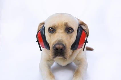 Heeft jouw dier weleens last van spanning bij harde geluiden zoals vuurwerk?