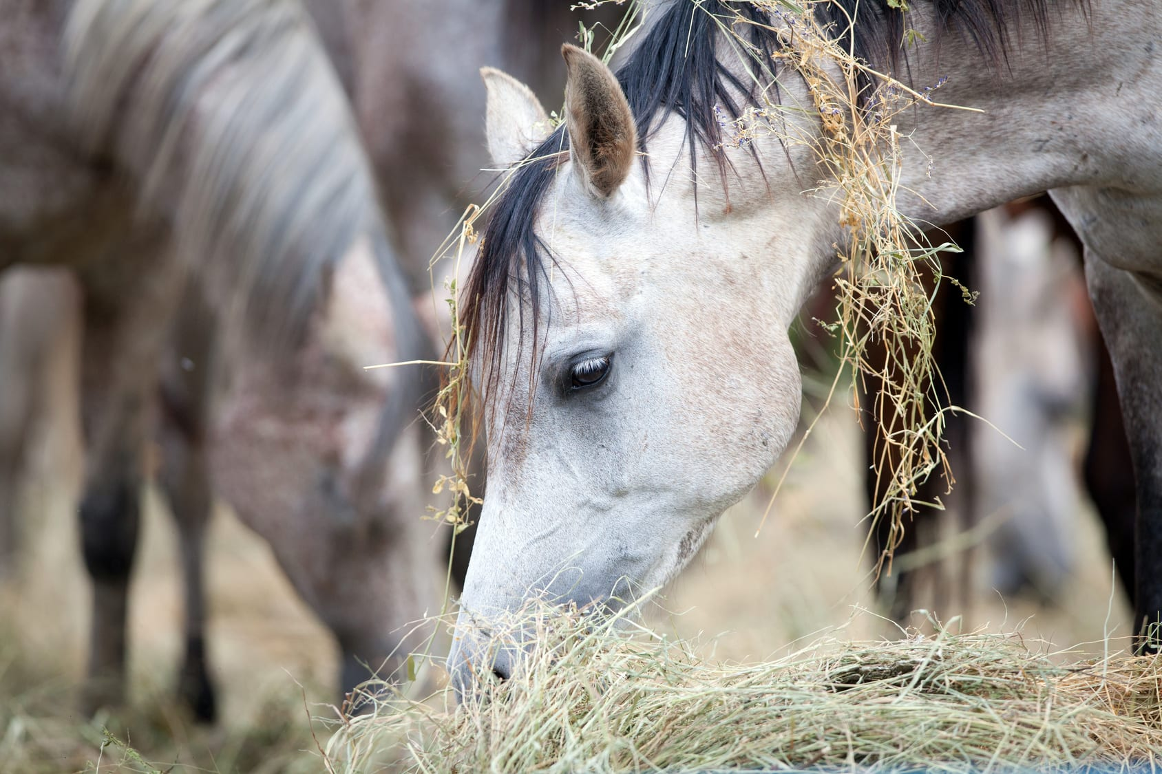 Het voorkomen van zandkoliek bij paarden