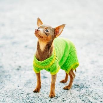 Moet mijn hond een jas aan?