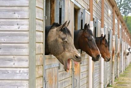 De risicofactoren voor koliek bij paarden en wat eraan te doen is