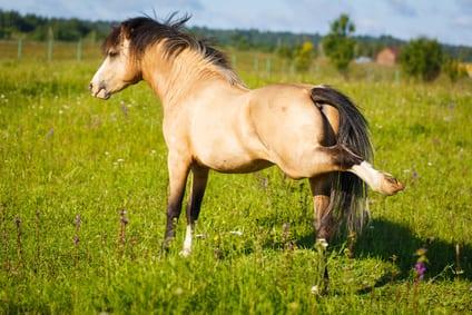 5 subtiele manieren waarop dieren spierpijn laten zien