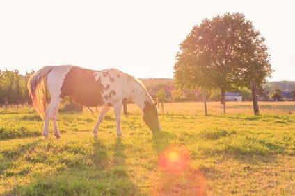 Verzorging van de gevoelige paardenhuid in de kootholte
