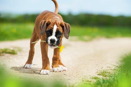 Top 8 detox-kruiden voor honden en katten