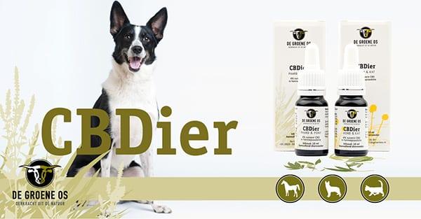 De Groene Os introduceert CBDier: CBD-olie van de allerhoogste kwaliteit voor dieren!
