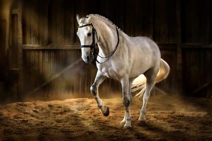 Hoefkatrolontsteking bij het paard