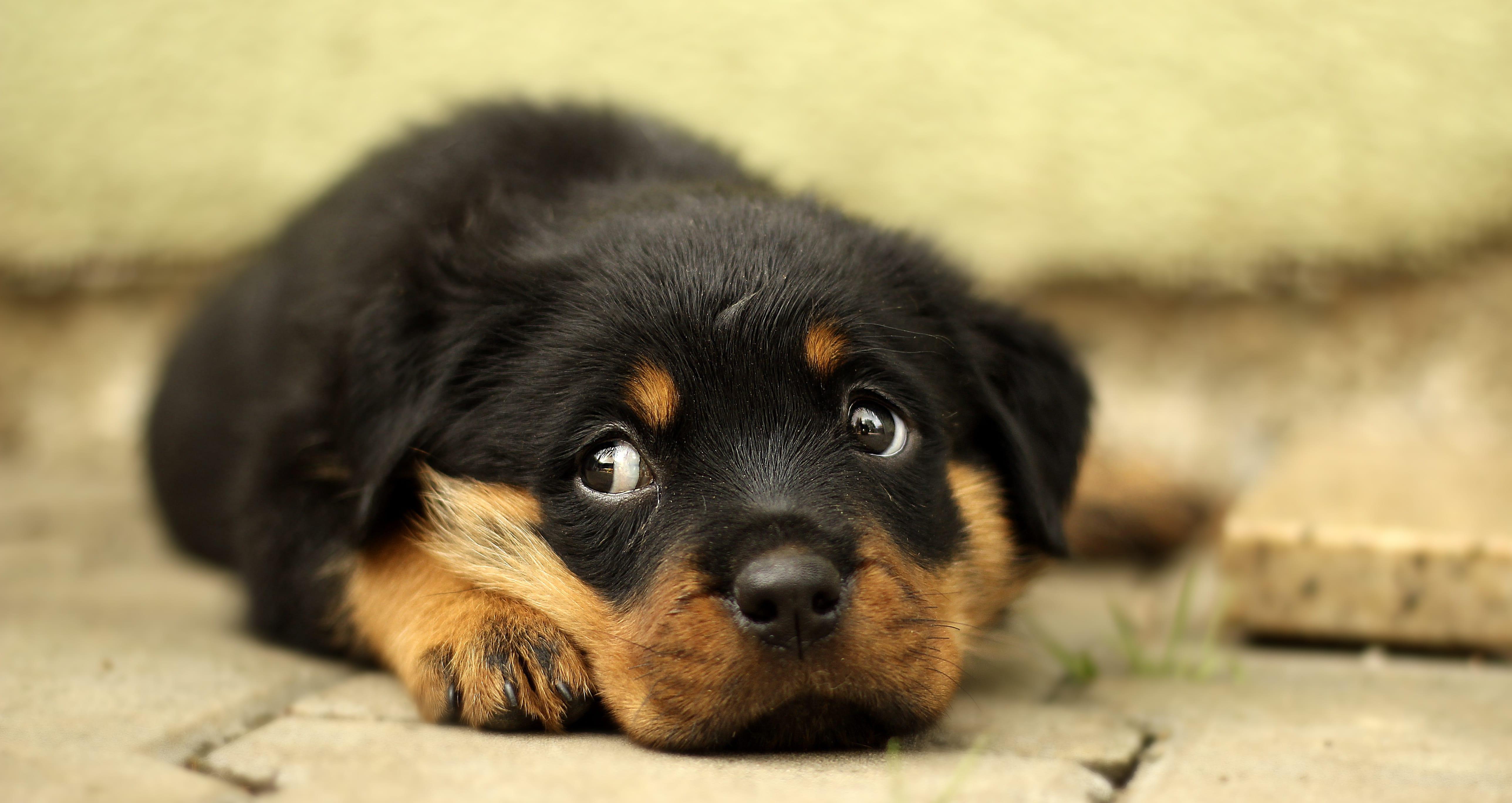 Een angstige hond moet je niet negeren