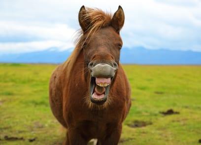 12 manieren waarop je paard gebitsproblemen laat zien