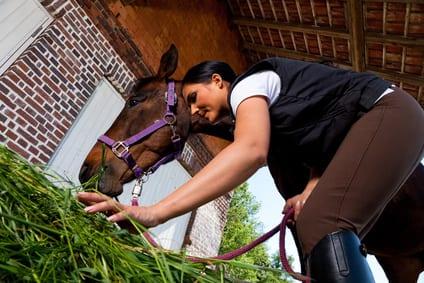 Te veel of te weinig: wanneer is eiwit schadelijk voor je paard?