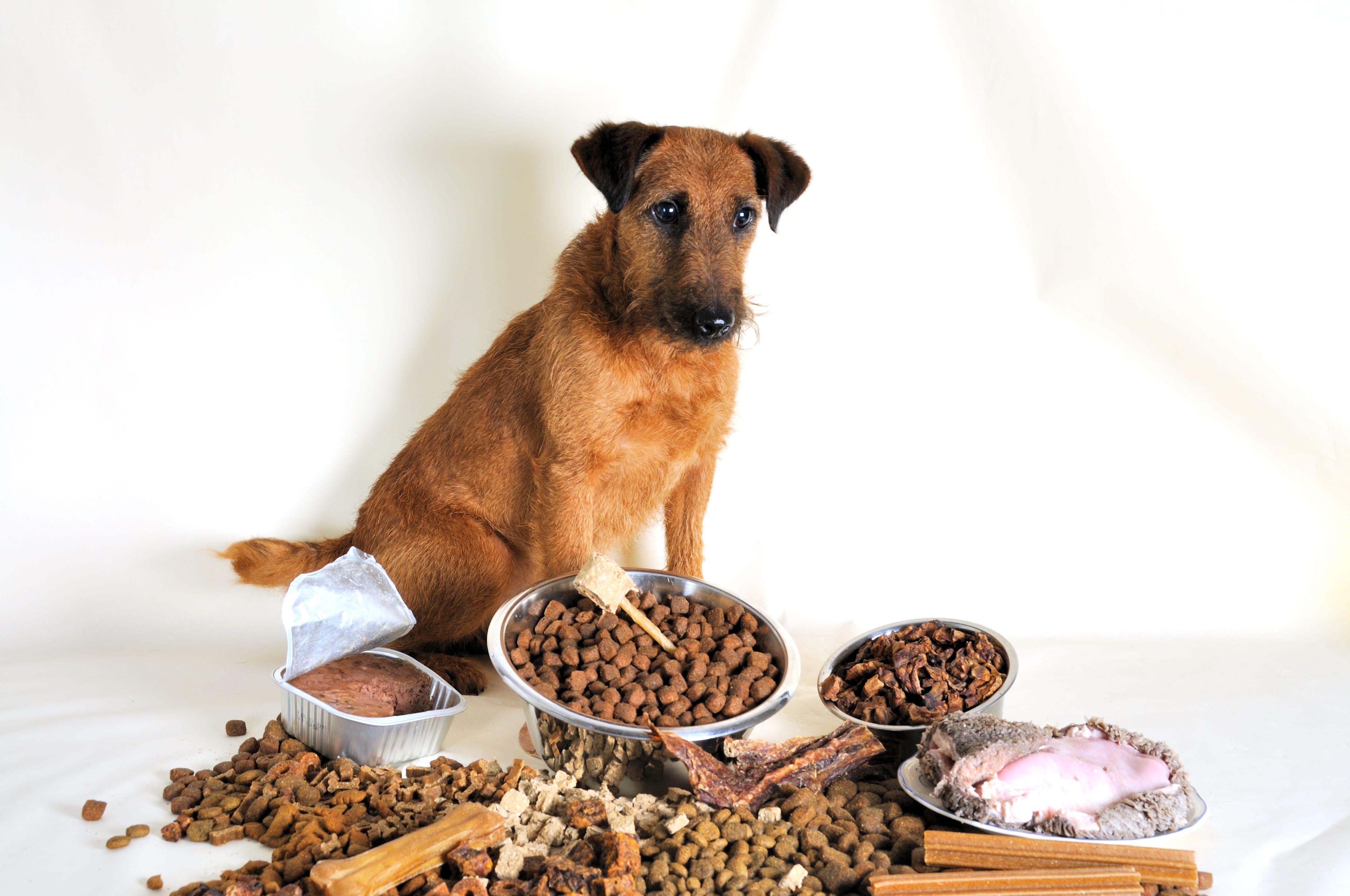 Over het combineren van hondenbrokken en vers vlees
