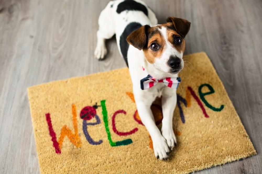 12 tips en tricks voor een nieuwe hond in het gezin