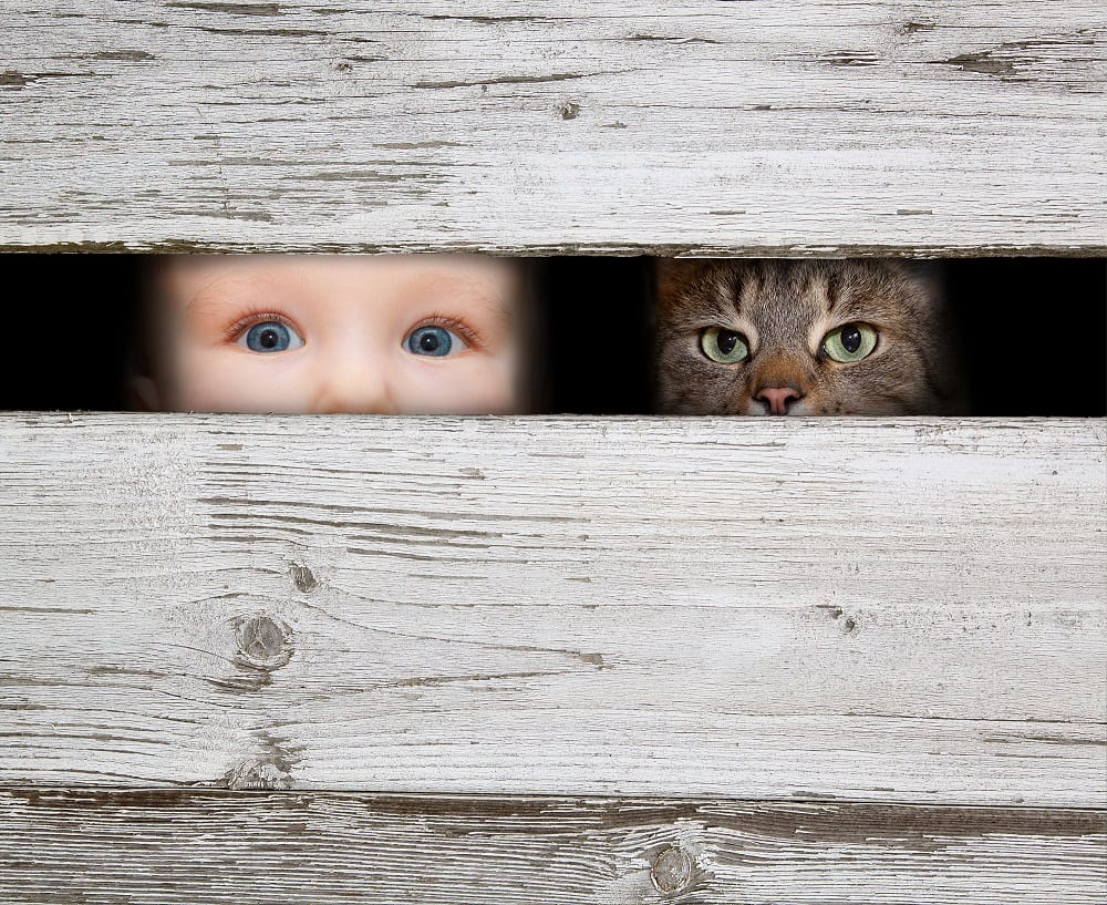 Hebben dieren privacy nodig?