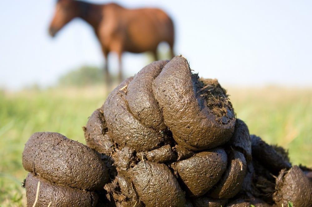 8 mythes over ontwormen bij paarden