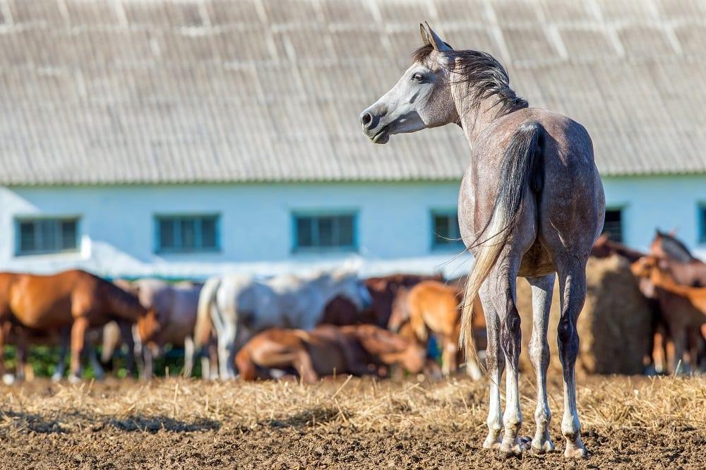 Verhuisstress bij je paard: waar denk je aan?