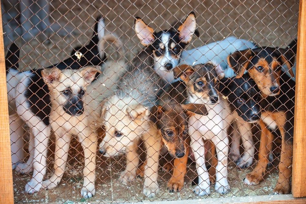 Kun je je dier beter wel of niet castreren?
