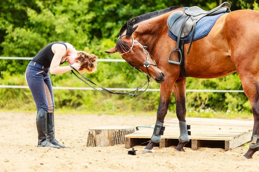 Beloon jij je paard genoeg?