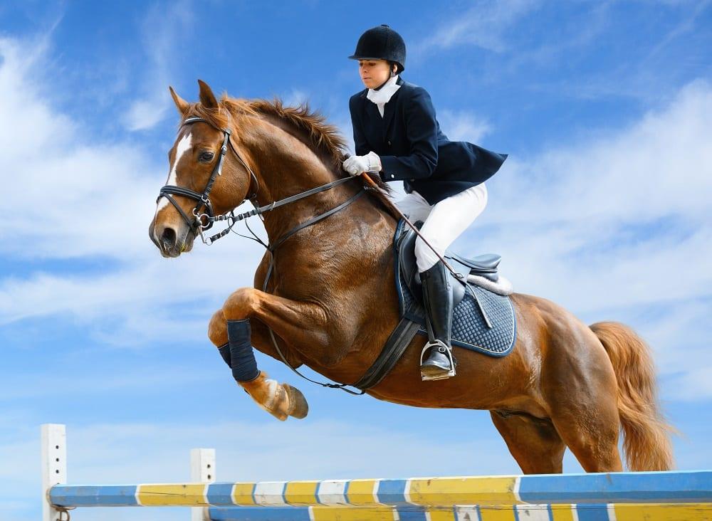 Paarden in de sport: weet jij het verschil tussen doping en een therapeutische behandeling?