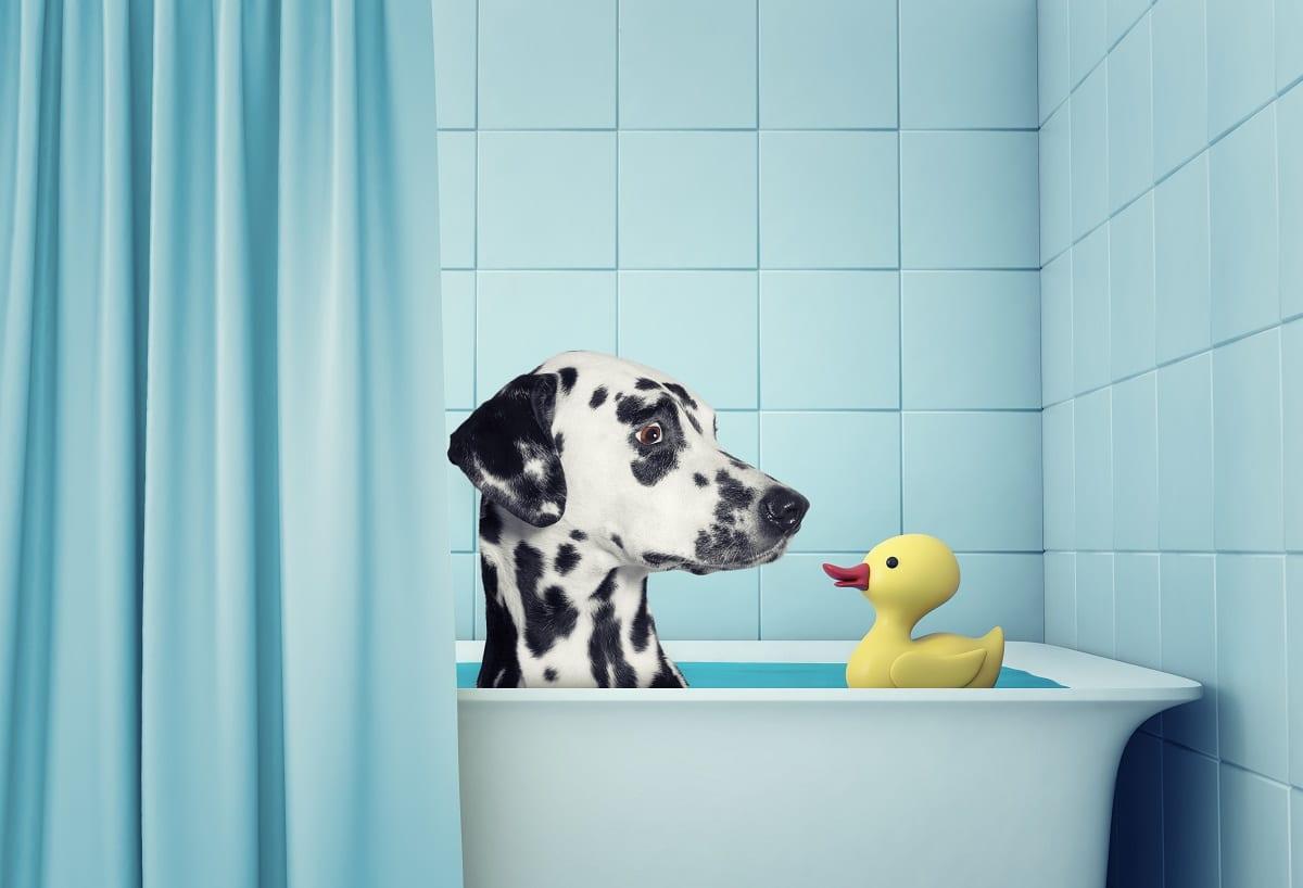 Kun je mensenshampoo voor je hond gebruiken?