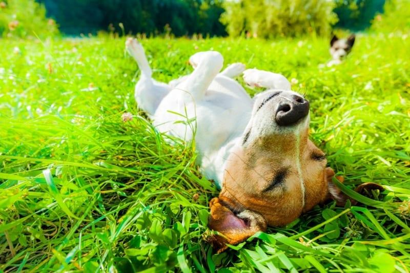 Waarom jouw hyperactieve dier weleens slaapgebrek zou kunnen hebben