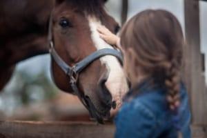 darmen paard