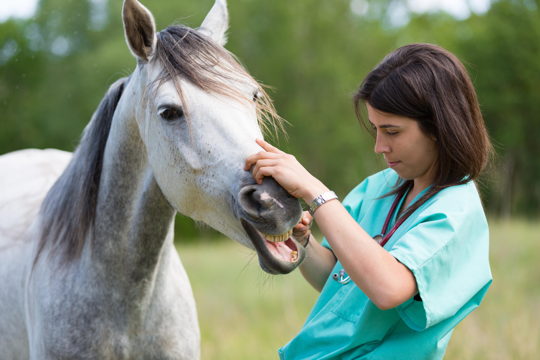 In 7 vragen alles wat je moet weten over slokdarmverstopping bij paarden