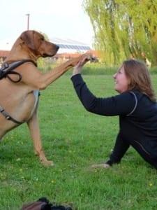 samen sporten met hond