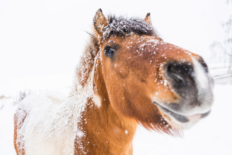 Hoe houd je winterbevangenheid buiten de deur?