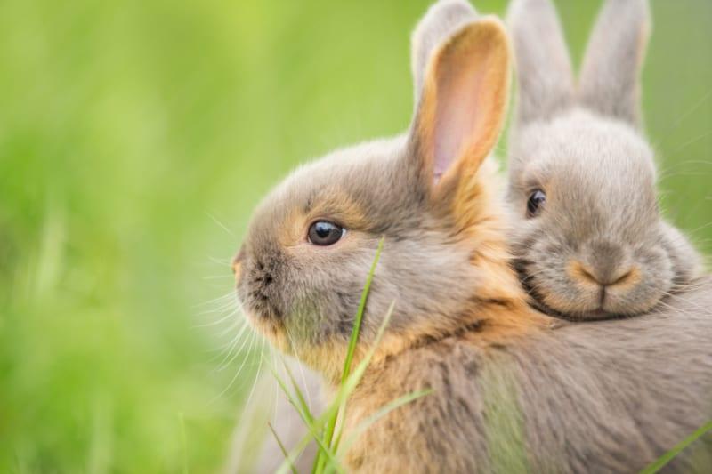 Praktische toepassingen van kruiden voor konijnen