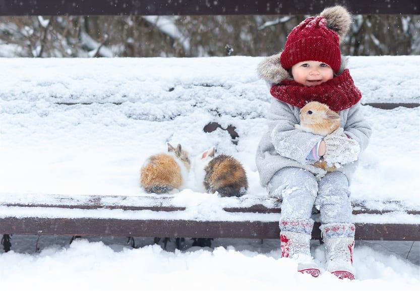 Buitenkonijnen in de winter