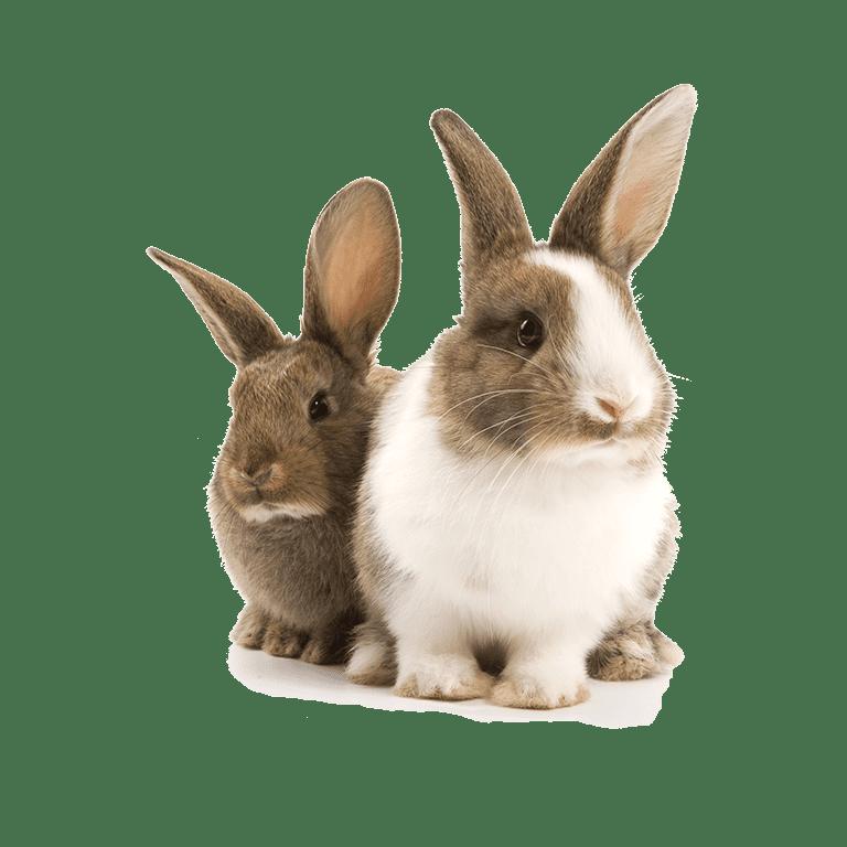 voor konijnen