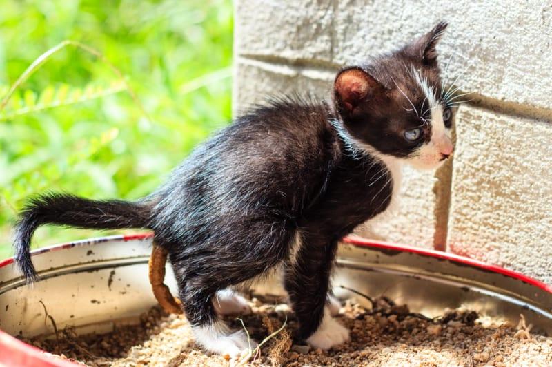Hoe ziet gezonde kattenpoep eruit?