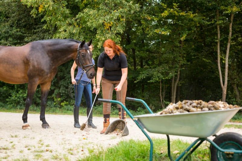 Wat is goede paardenmest?