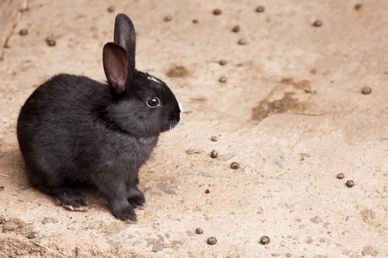 Hoe herken je gezonde konijnenkeutels?
