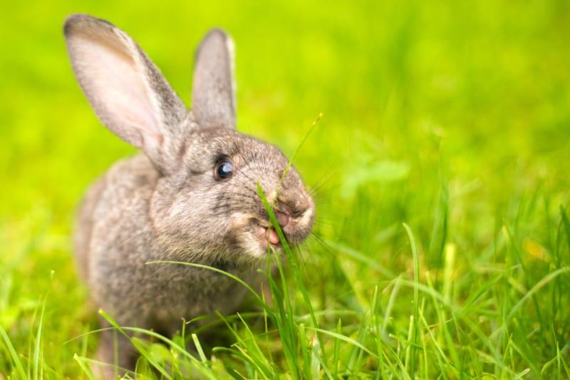 Het konijn laat z'n tanden zien!