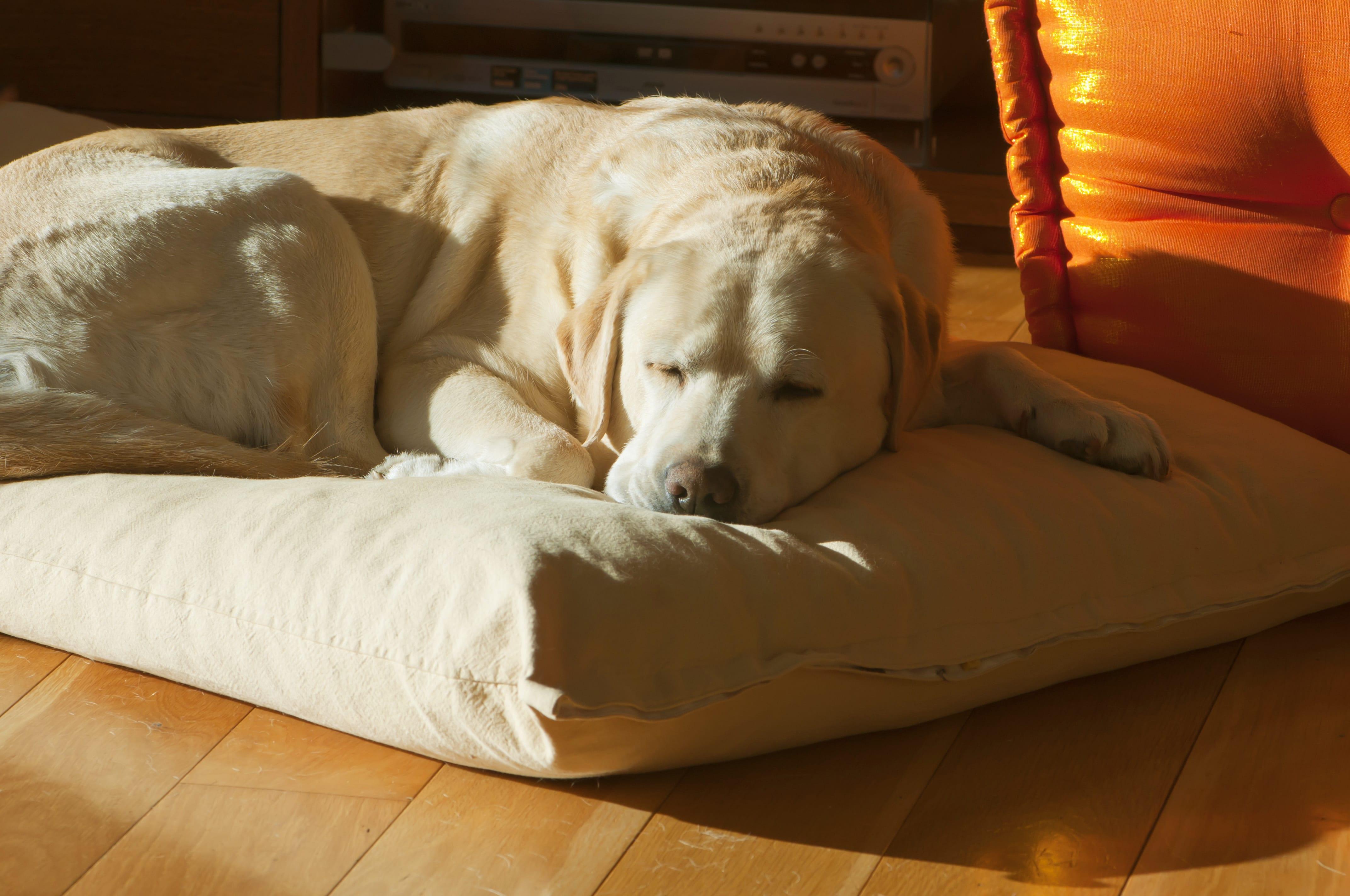 Heeft je hond moeite met opstaan?