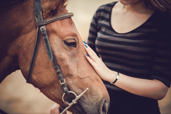 Hoe herken je pijn bij dieren?