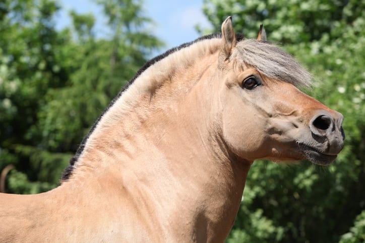 Hoe pak je overgewicht bij paarden aan?