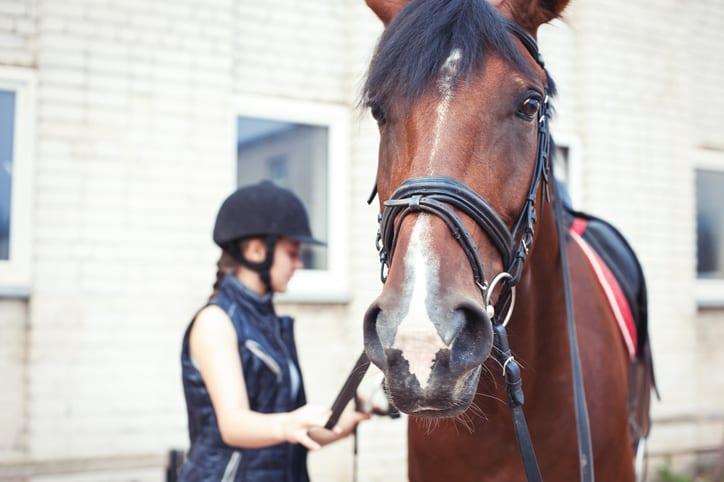 Singeldwang bij paarden: maagzweren en andere oorzaken